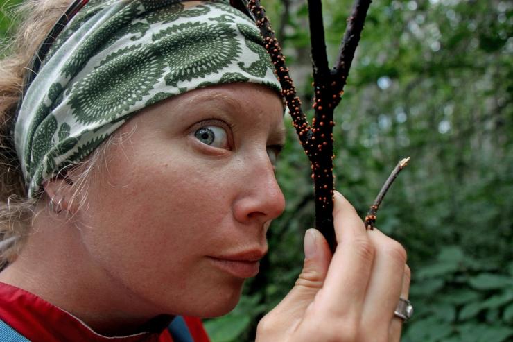 Lichen her element in Alaska. (2011)